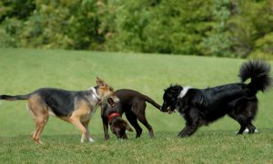 Flower Mound's first dog park will soon be under construction.